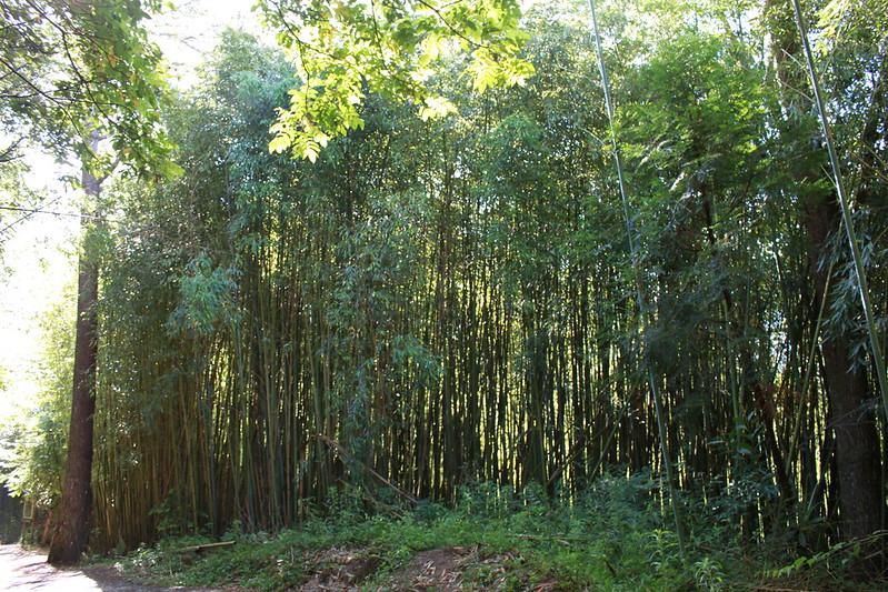 環島-新竹上帝部落-司馬庫斯隨拍 (34)