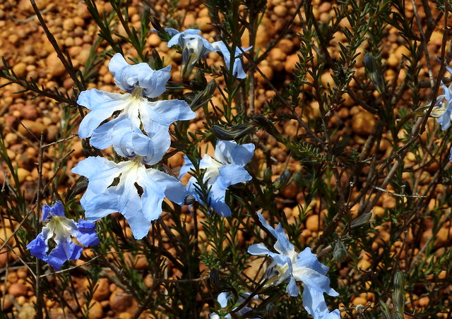 Williams Nature Reserve flora (set of 8)