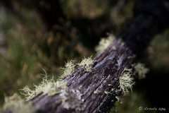 Moss on the Tree Trunks 9046