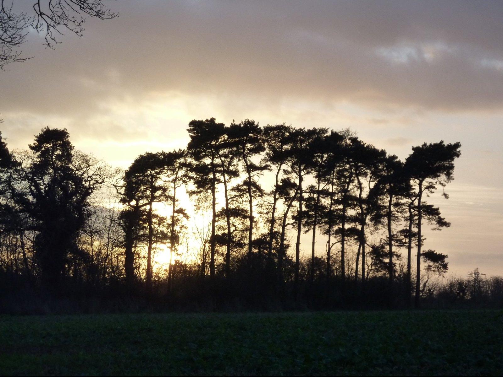 Sun Setting behind Trees SWC Walk 34 Newbury Racecourse to Woolhampton (Midgham Station)