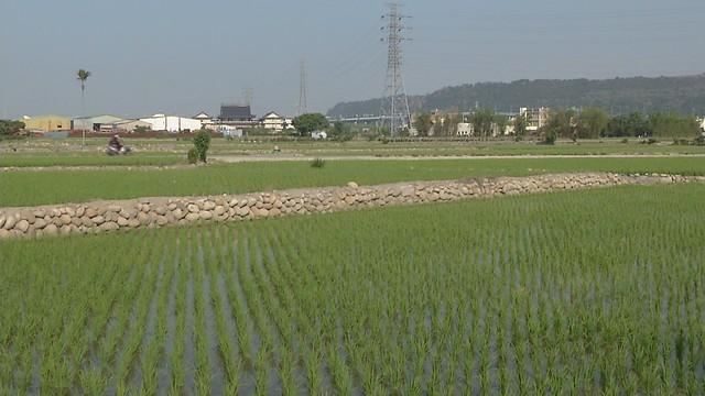 台中清水農地。圖片來源:公共電視「我們的島」。攝影:陳志昌。