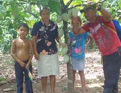 2016 Dona Luca cacao trees