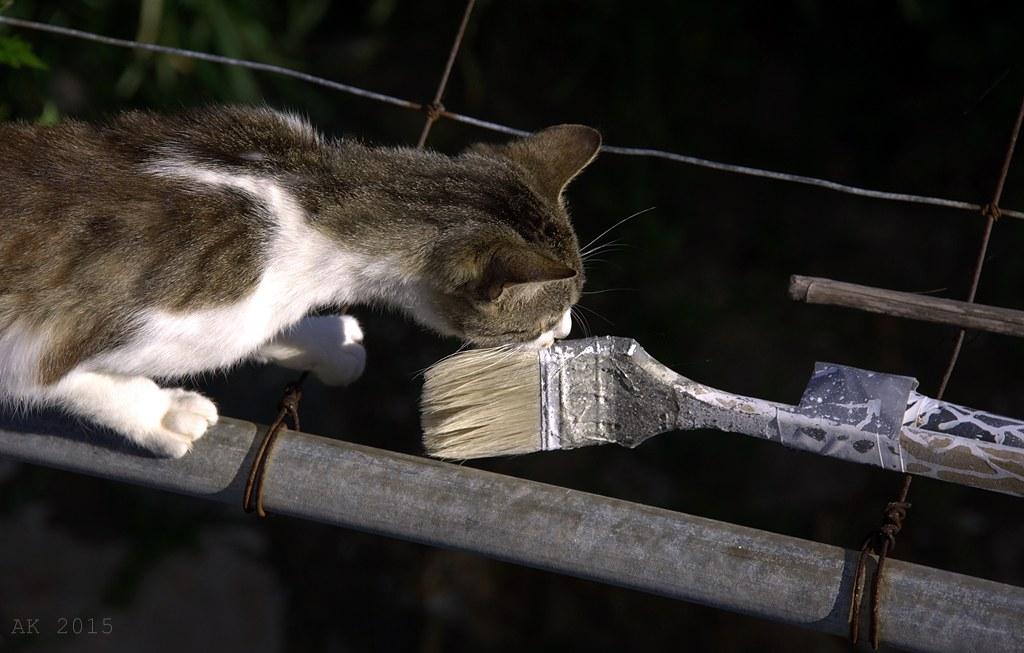 Thassos-Cats