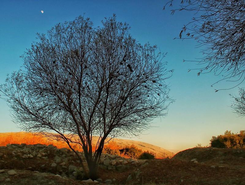 Tree. , sky , moon