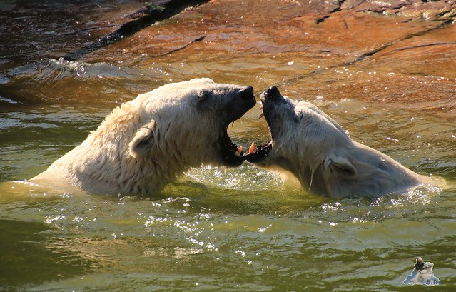 Tierpark Berlin 02.08.2015 027