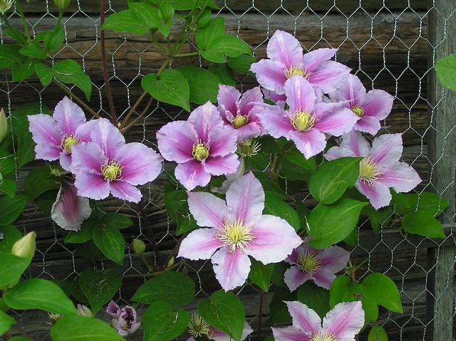 Kris'is Garden, Hiiumaa