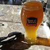 Sam Adams Summer Ale  #Beer