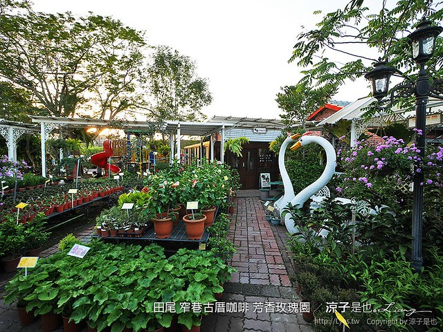 田尾 窄巷古厝咖啡 芳香玫瑰園 15