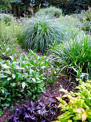our front yard garden
