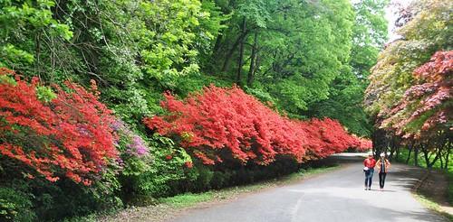 41 Parque Nacional en Gwangju (13)