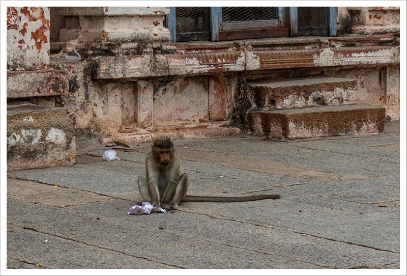 India-83