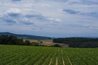Slavonian Landscape