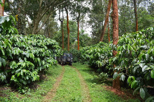 Around the Coffee Plantation
