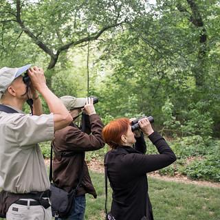 Bird spotters