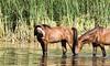 Wild Horse Series by Valerie Cozart by valeriecozart