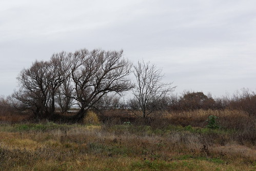 2017-01-03 Big Break Shoreline's Watershed (#1)
