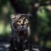 Street cat 176 by Yalitas