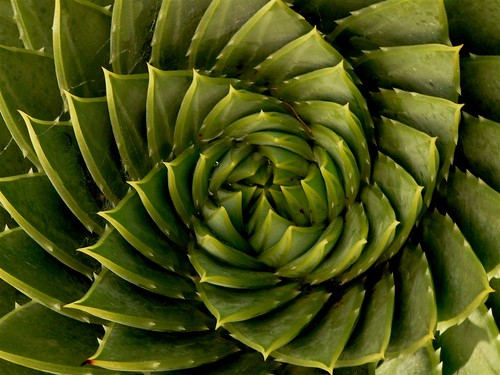 fibonacci strikes again