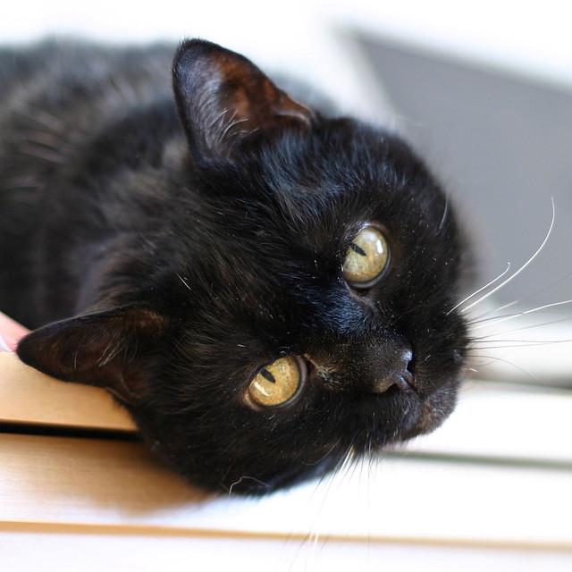 Kitty on desk