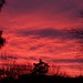 Sunrise by Rachel Pennington