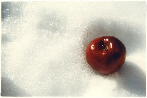 Apple in Snow at Lake Tahoe