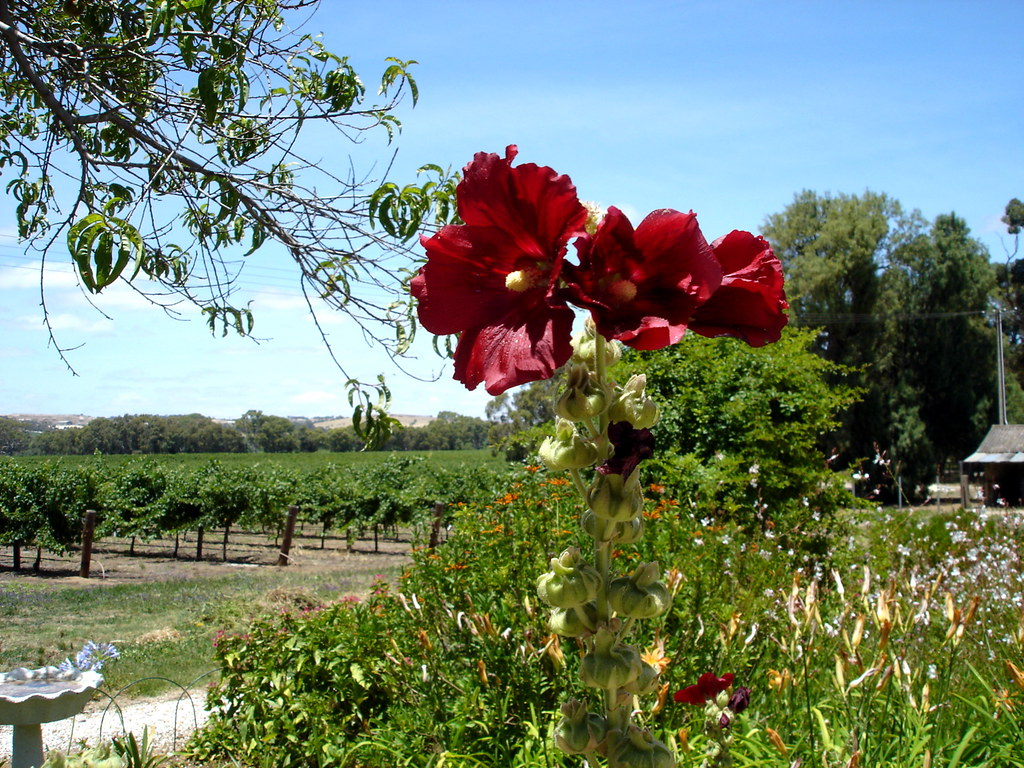The Willows Winery