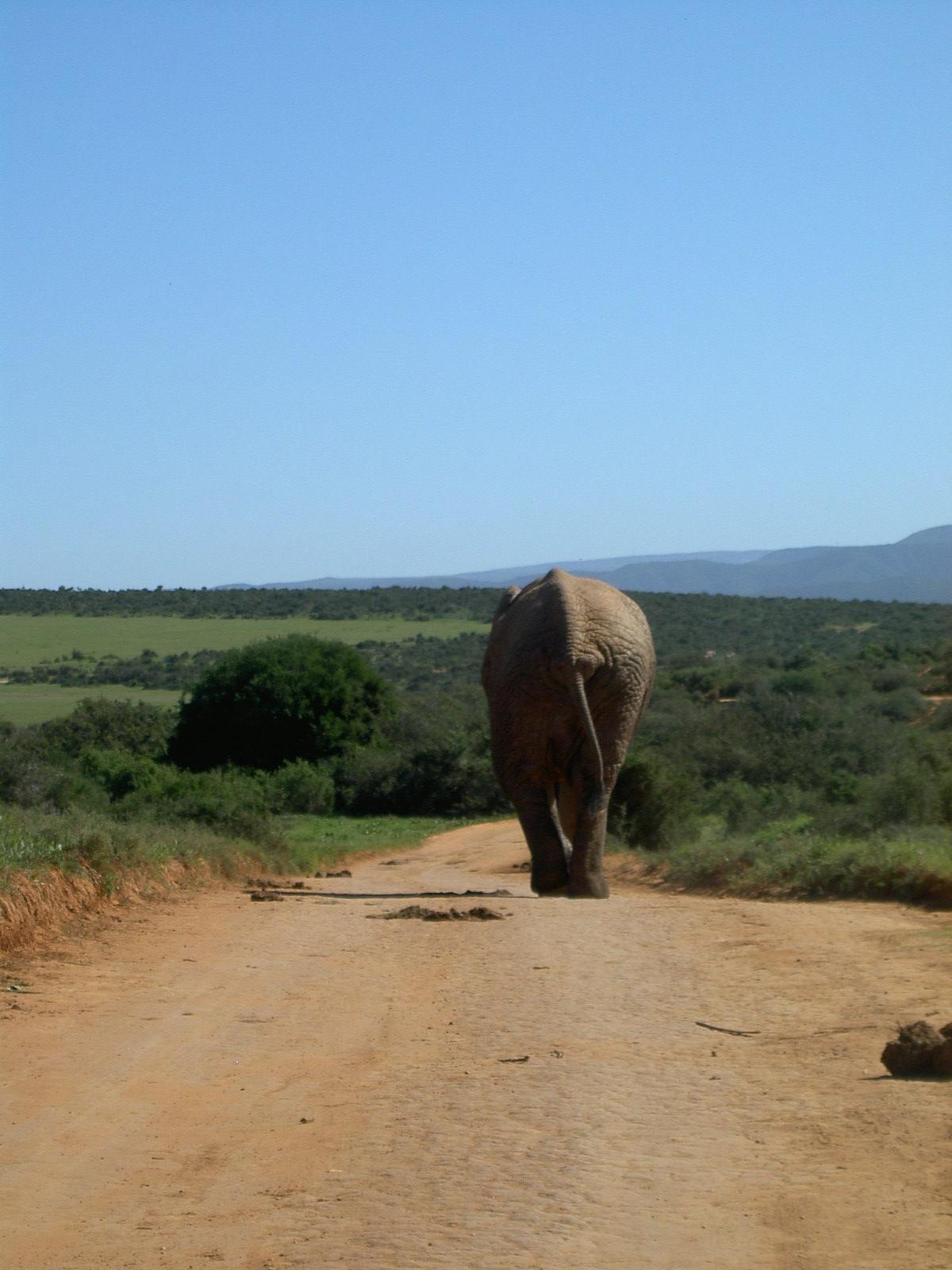 Addo Elephants