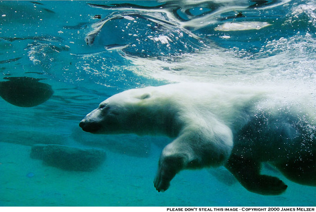 Image Result For Polar Bear Color
