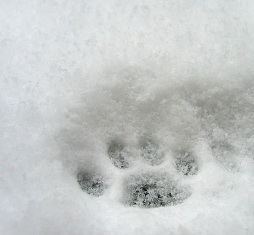 Paw in the snow