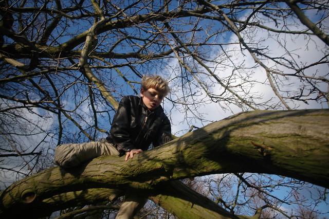 Goos in tree