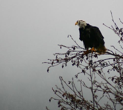 wet_eagle3