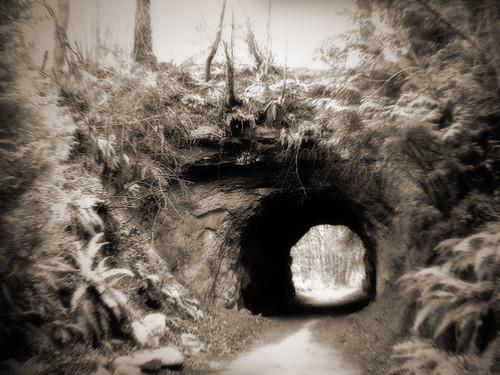 2005 trees usa nature forest landscape geotagged ir us washington holga bestof unitedstates hill arboretum tunnel unfound best trail infrared bellingham wa ferns whatcom sehome davewardsmaragd geo:lon=122482624 geo:lat=48735049 pss:opd=1110323082 pss:opd=1110147388