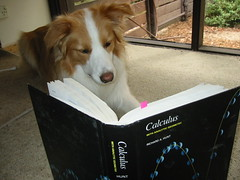 NooNoo studying calculus
