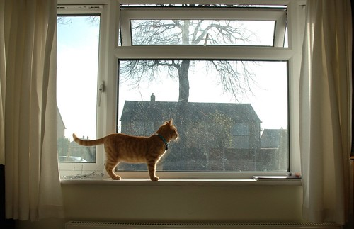 Kitten on windowledge