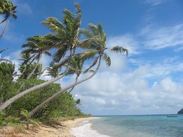 Naviti Island palm trees, Fiji