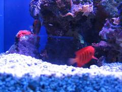 invertebrate(0.0), coral reef(1.0), coral(1.0), fish(1.0), coral reef fish(1.0), marine biology(1.0), aquarium lighting(1.0), freshwater aquarium(1.0), underwater(1.0), reef(1.0), blue(1.0),