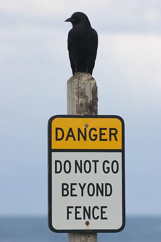 Danger: Raven