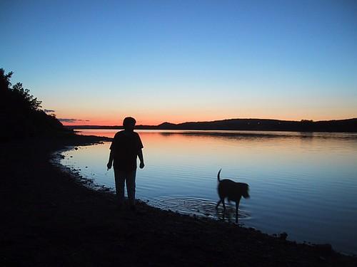 dog animal river sunset walk fredericton newbrunswick