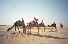 Still More Camels!