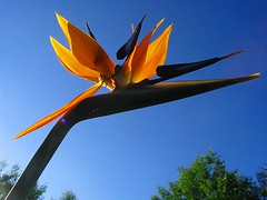 Flowers - Strelitzia