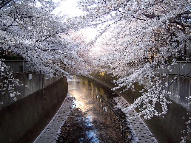 Sakura, Canon IXY DIGITAL L