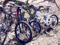 bikebuds