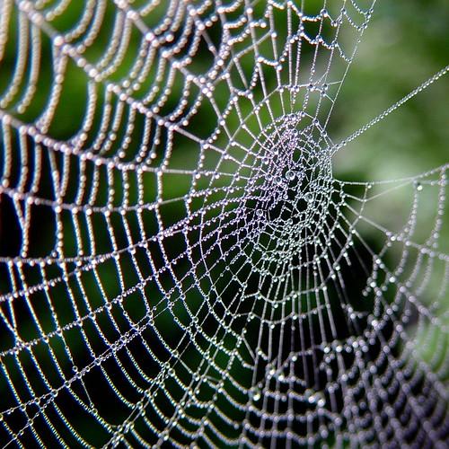 wide web