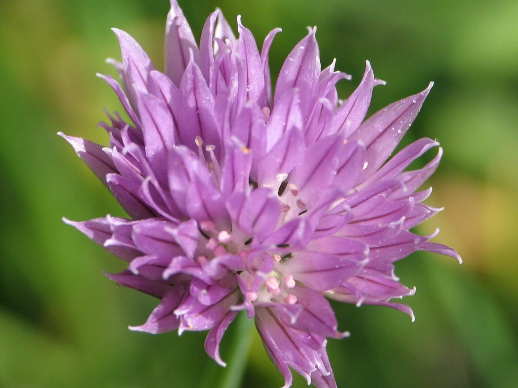 Desert Wildflower Field Guide - Opiniones de viajeros sobre DesertUSA