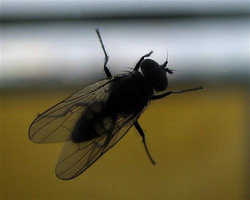 Fliege schwirrt im zimmer herum ps3 forum - Fliege im zimmer was tun ...