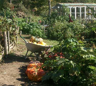 Autumn veg