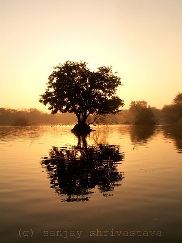 trees sunset india reflection tree water silhouette sunrise nationalpark forsale sale stock ghana solitary sanctuary sanjay rajasthan lonelytree wetland bharatpur copyrighted keoladeo copysanjay sanjayshrivastava abigfave colourartaward flickrslegend mojo360 mojosanjay