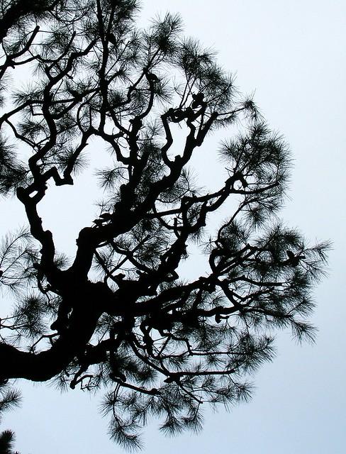 Tree Silhouette Metallic Paint