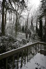 snowy woods outside home office
