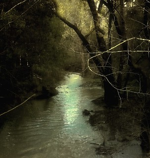 The Lagunitas Creek